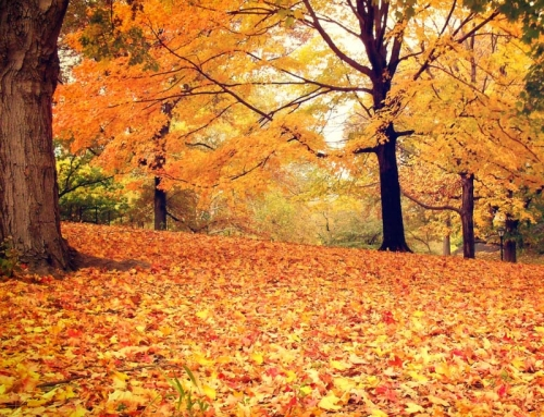 10 Ways To Prep Your Lawn For Fall