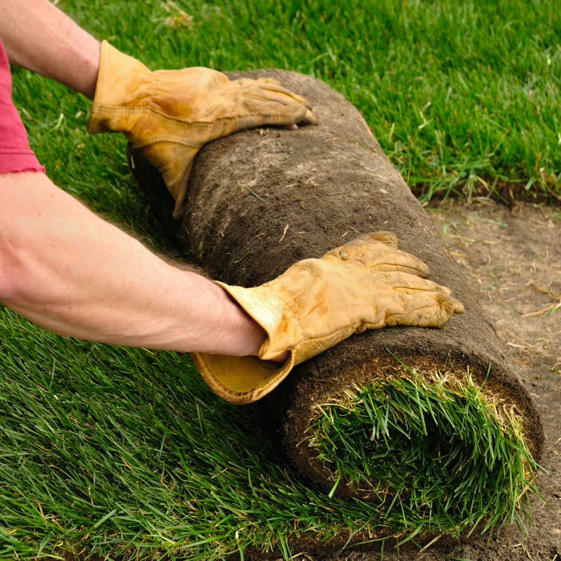 The Best Way to Install Sod