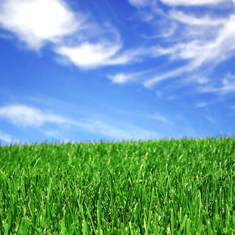 How To Prep Your Lawn For Spring