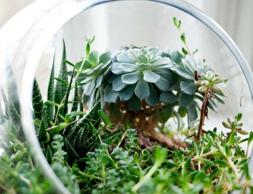How Indoor Plants Improve Your Mental and Physical Health.