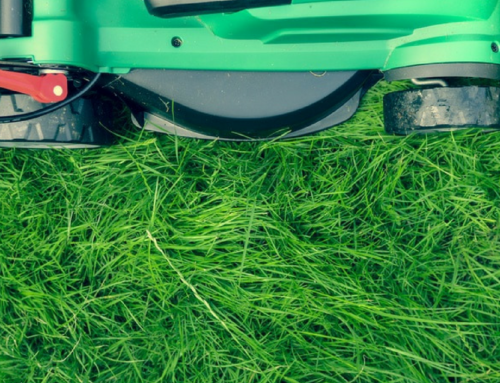 When and Why Do I Need Fertilizer for My Lawn?